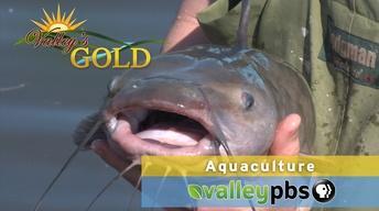 PREVIEW | Episode 4: Aquaculture