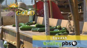 PREVIEW | Episode 9: Squash
