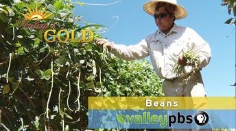 Episode 10: Beans
