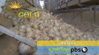Episode 12: Onions