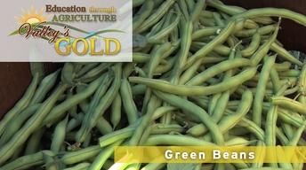 Education through Agriculture: Green Beans