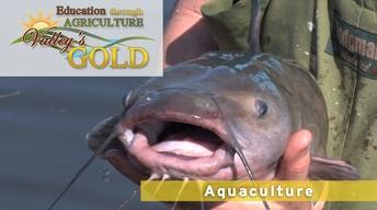 Education through Agriculture: Aquaculture