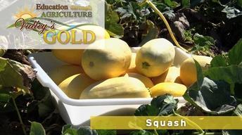 Education through Agriculture: Squash