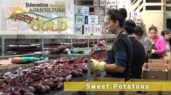 Education through Agriculture: Sweet Potatoes
