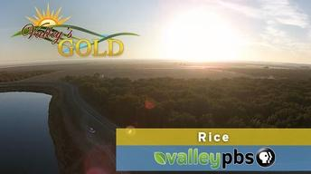 Valley's Gold: Rice