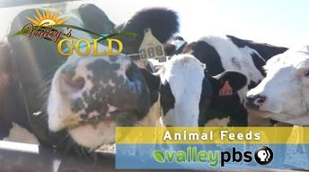 Valley's Gold: Animal Feeds