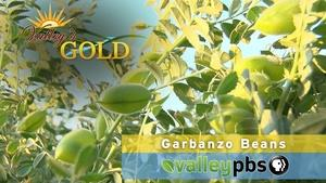 Valley's Gold: Garbanzo Beans