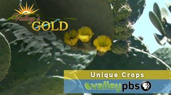 Valley's Gold: Unique Crops