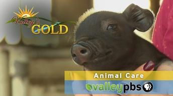 Valley's Gold: Animal Care