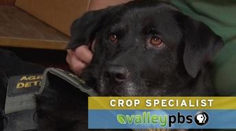 Valley's Gold: Crop Specialists