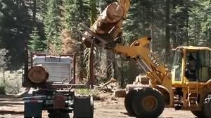 Season 2, Ep. 7: Timber