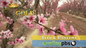 Season 2, Ep. 1: Bees & Blossoms