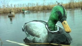 Waterfowl Hunting - 6008