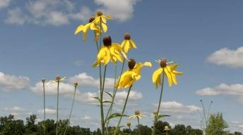 Prairie Flora: History and Future