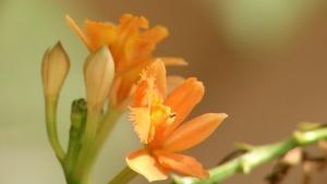 Raising Orchids