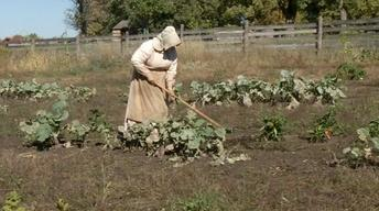 Growing Vegetables in the 1800s