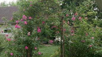 The Shangri-La Garden