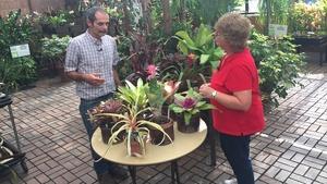 BOC Speciality Plants