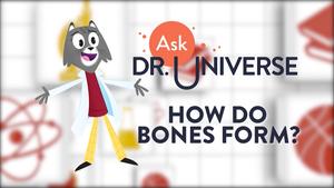 Dr. Universe: Bones