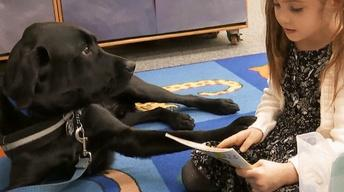 Service Dog in the Classroom