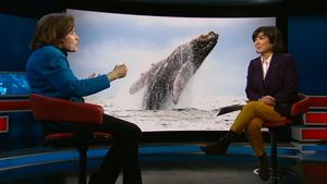 Amanpour: Sylvia Earle and Chimamanda Ngozi Adichie