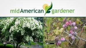 Mid-American Gardener with Sandy Mason January 11, 2018