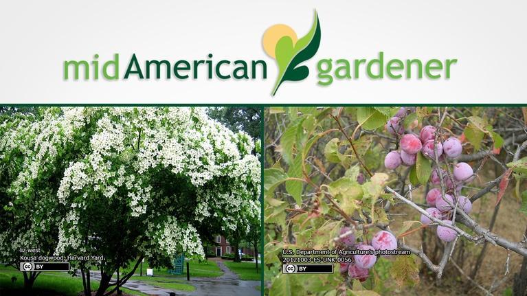 Mid-American Gardener: Mid-American Gardener with Sandy Mason January 11, 2018