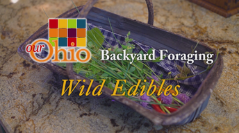 Backyard Foraging - Wild Edibles