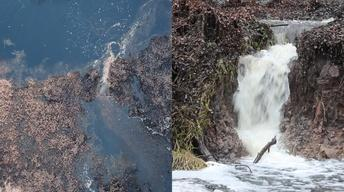 Lake Miccosukee Sinkhole Hike: Floridan Aquifer Exposed!