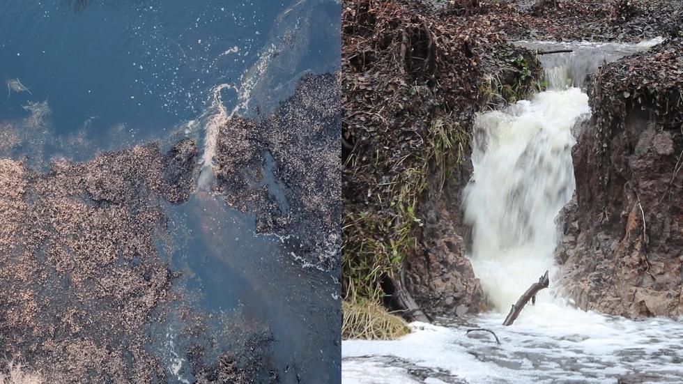 Lake Miccosukee Sinkhole Hike: Floridan Aquifer Exposed! image