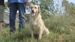 Aquaculture and Doug's Golden Retrievers