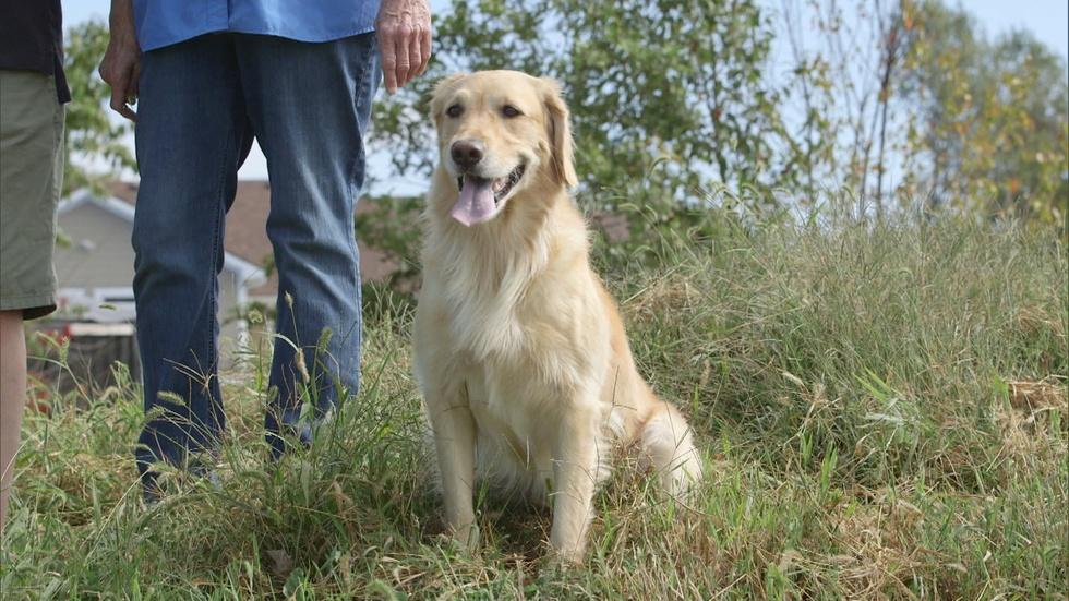 Aquaculture and Doug's Golden Retrievers image