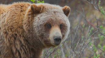 Endangered Species: Saved Species