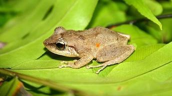 Balancing the Endangered and Invasive Among Us
