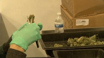 Hurdles remain for legal marijuana as industry readies