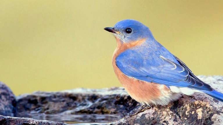 Virginia Home Grown: Attracting Birds; Charlottesville Area Tree Stewards (#1707)