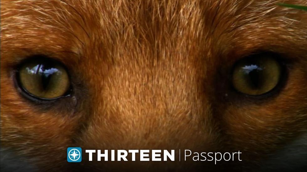 THIRTEEN Passport image