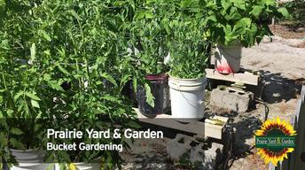 S31 Ep4: Bucket Gardening