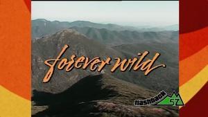 Forever Wild (1985)