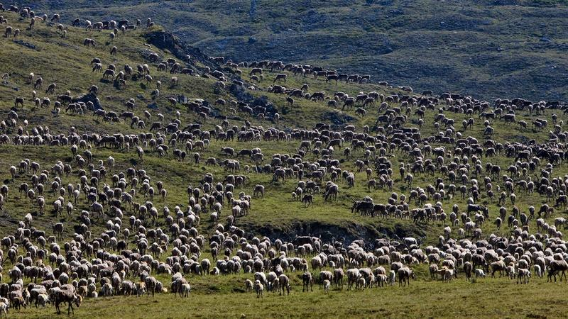 Image result for caribou migration