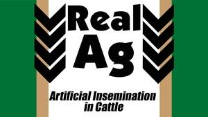 RealAg Artificial Insemination in Cattle (Ep608)