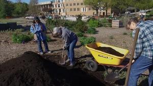 Backyard Farmer:  Early Season Greens