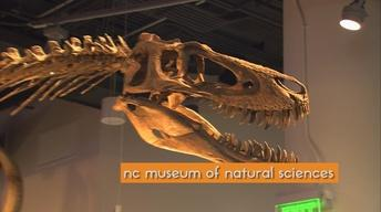 RAWR! ROOTLE Explores the NC Museum of Natural Sciences!
