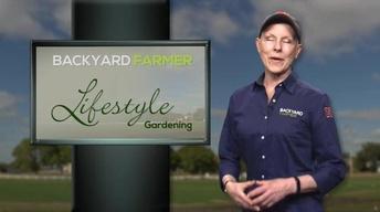 Lifestyle Gardening: Tall Plants