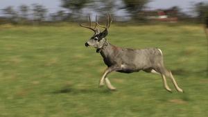 Mule Deer, Game Warden Aid & Wild Wings
