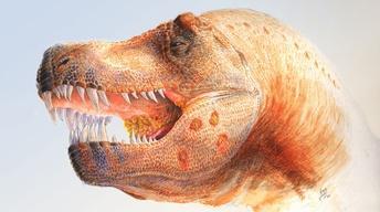 S44: Dinosaur Parasites