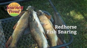 Redhorse Fish Snaring