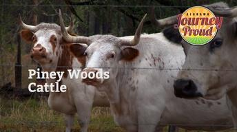 Piney Woods Cattle