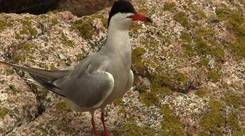 Maine's Birds