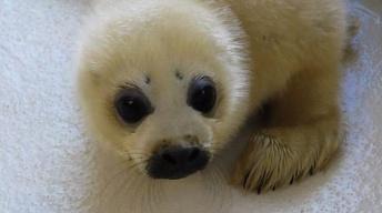 Self-Publishing/Marine Mammal Rescue